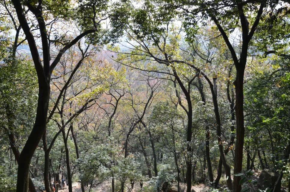 天平山枫林